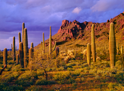 Arizona Cactus Landscape Landscape Options For Desert Living