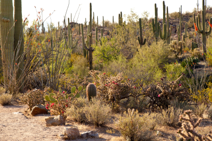Saguaro National Park Awesome Outdoor Adventures In Arizona