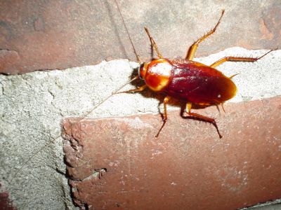 Roach Cement Pest Control and Prevention Tips for Commercial Properties
