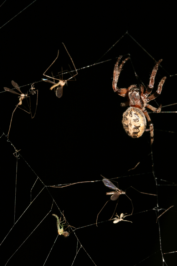 spider web in dark 5 Tips On How To Avoid Bug Bites Around The House
