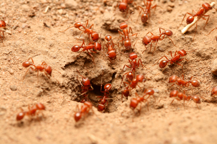 Sugar ants bathroom