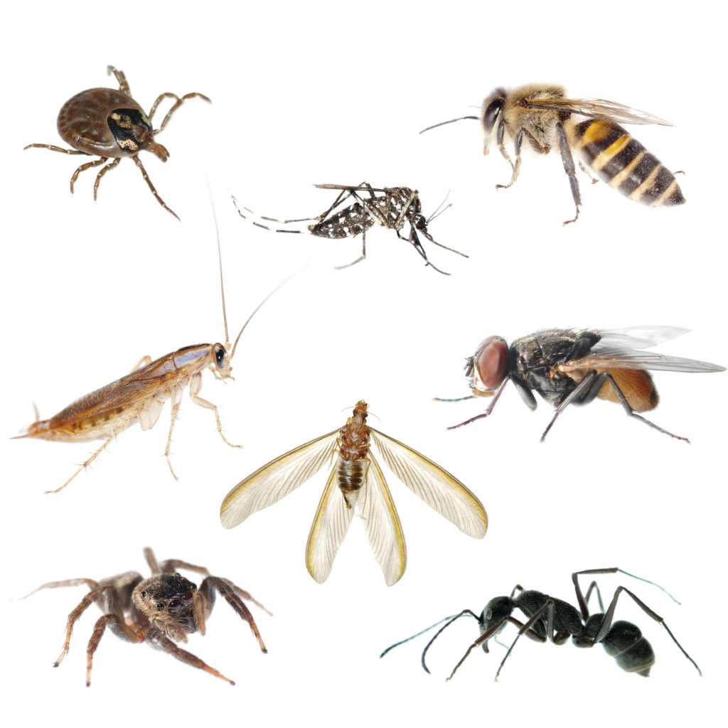 Misc Pests 1024x1024 Pest Control Chandler, AZ