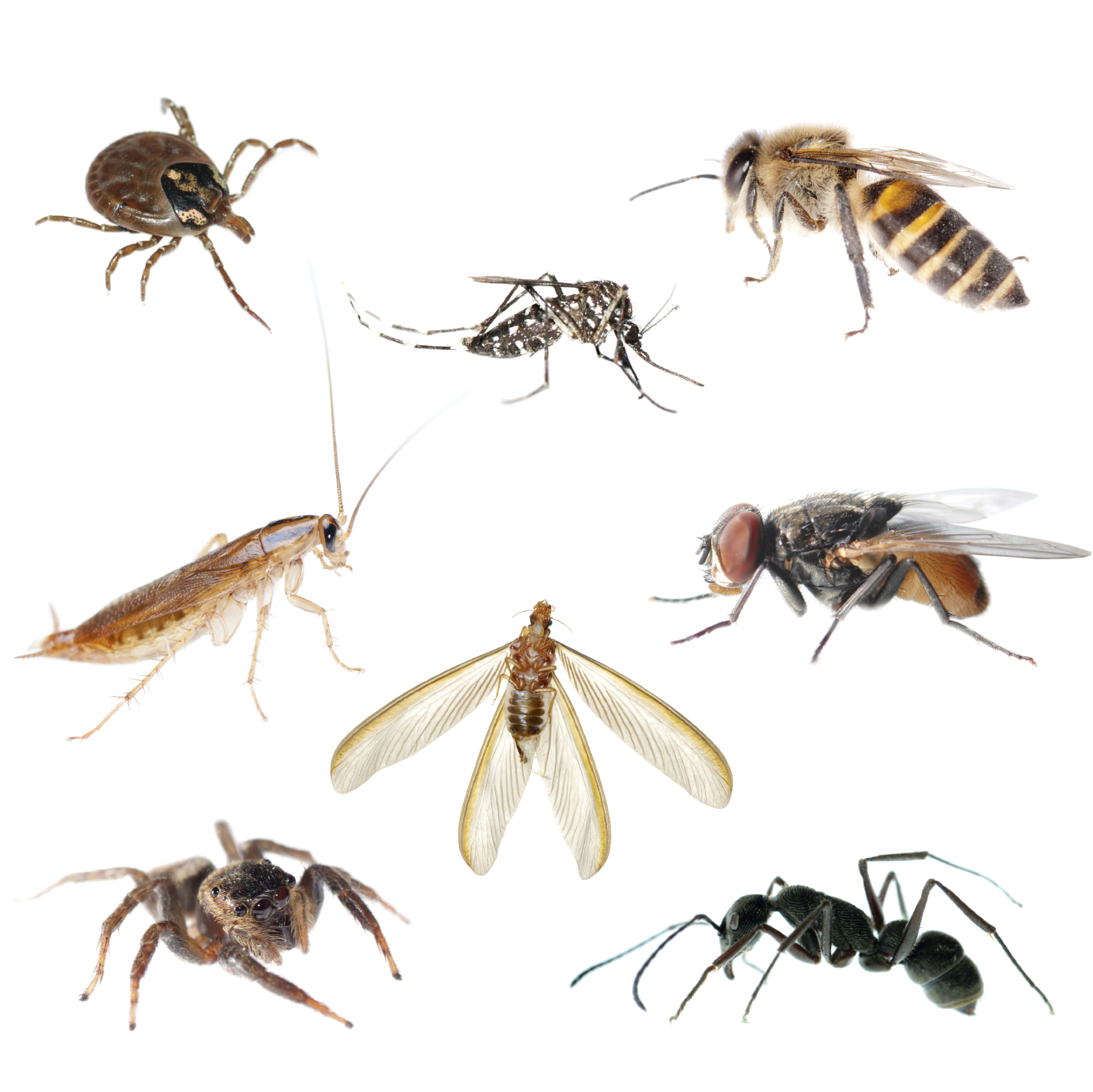 Pest Control Chandler Az on human time span